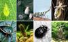 """Биологическая защита растений: принцип """"работы"""" биофунгицидов"""
