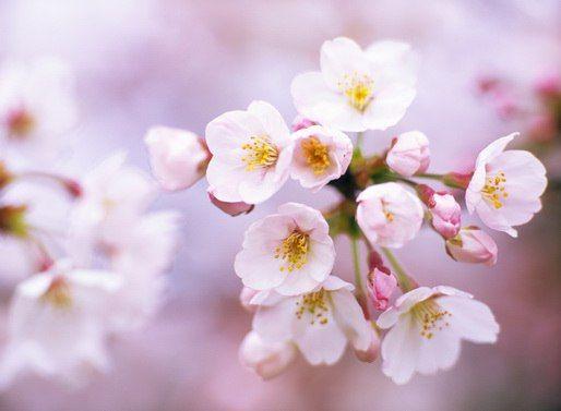 шкаф купе с фотопечатью цветы 3 на заказ от компании аглаз люкс